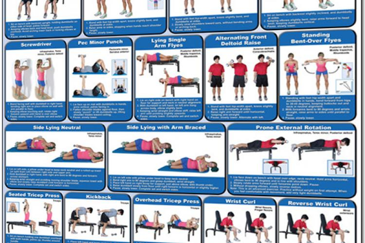 Dumbbell Exercises Poster - Shoulders and Arms